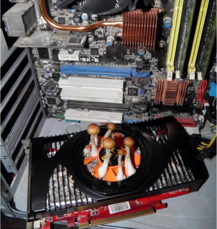 grzybki w komputerze 2